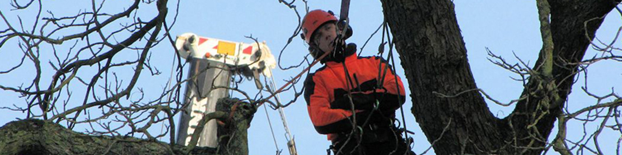 Maarten-stam-boomspecialisatie